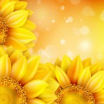 Macro SunFlower Background. EPS 10