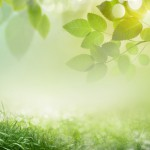 Abstract spring background 23